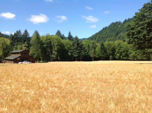 Siuslaw field